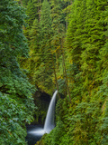 Veiw of Metlako Falls from Eagle Creek Within the Columbia River Gorge, Oregon. Photographic Print by Patricia Davidson
