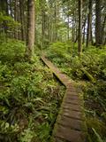 West Coast Trail - Day 3 Reprodukcja zdjęcia autor Sergio Ballivian