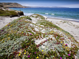 Santa Rosa Island, Channel Islands National Park, California. Wildflowers. Photographic Print by Ian Shive