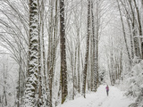Alyson Dimmitt Gnam Trail Running in the Cascades.  Winter in Washington. Photographic Print by Steven Gnam