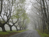Misty Road in Early Springtime, Cape Elizabeth, Maine Photographic Print by Nance Trueworthy