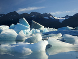 Icebergs Floating in Alsek Lake. Glacier Bay National Park, Ak. Photographic Print by Justin Bailie