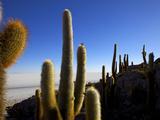Cacti on Isla De Los Pescadores, Salar De Uyuni Southwest Highlands Bolivia South America Photographic Print by Simon Montgomery