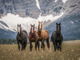 Horses Along the Rocky Mountain Front, Montana. Photographic Print by Steven Gnam