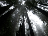 Redwood National Park, California Photographic Print by Randall Tate
