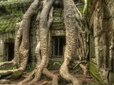 The Ta Prohm Temple Located at Angkor in Cambodia Photographic Print by Kyle Hammons