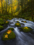 Fall in the Columbia River Gorge in Oregon Photographic Print by Miles Morgan