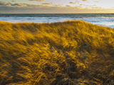 Sunset Along Moshup Beach, Martha's Vineyard with View of Ocean and Grass Blowing During Late Fall Photographic Print by James Shive