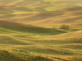 Lemon Lime - Palouse Washington Photographic Print by Aaron Reed