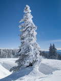 Snow Covered Trees in the Wintery Rocky Mountains, Colorado Photographic Print by Howard Newcomb