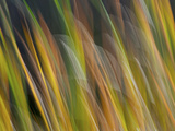 Motion Blur of Grasses Along a Canal at Lake Mattamuskeet Near Engelhard, North Carolina Photographic Print by Melissa Southern