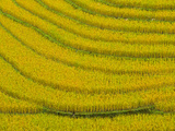 Lush, Terraced Rice Paddies Create Textured Landscapes in Hmong Hill Tribe Country, Sapa, Vietnam Photographic Print by Dan Morris