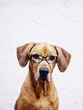 Portrait of Dog Wearing Glasses Photographic Print by Allison Schwickerath