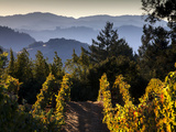 Sonoma Vineyard No.2 Photographic Print by Ian Shive