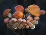 Boletus Mushrooms in Chokosna Photographic Print by Ethan Welty