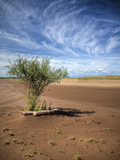 A Tree Growing on the Dunes with Cirrus Clouds in the Sky at Great Sand Dunes National Park, Co Photographic Print by Ryan Wright