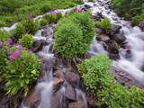 A Mountain Stream Within the Indian Peaks Wilderness Area Near Rocky Mountain National Park, Co Photographic Print by Ryan Wright