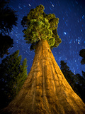 Giant Sequoia under the Milky Way Photographic Print by Ian Shive