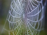 Spiderwebs, Alaska Photographic Print by Ethan Welty