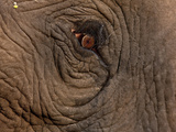Extreme Close Up Portrait of the Red Eye of an African Elephant. Photographic Print by Karine Aigner