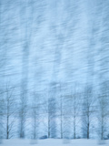Motion Blurred Winter Trees, Washington State, Usa Photographic Print by Rob Casey