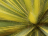 Motion Blur of Yucca Plant at Sarah P. Duke Garden in Durham, North Carolina Photographic Print by Melissa Southern