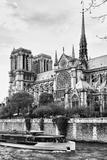 Bateau Mouche des Vedettes de Paris - Notre Dame Cathedral - Paris - France Photographic Print by Philippe Hugonnard