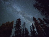 The Milky Way Shines Above the Forest in the San Juan Mountains of Southern Colorado. Fotodruck von Ryan Wright