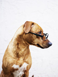 Dog Wearing Glasses. Photographic Print by Allison Schwickerath