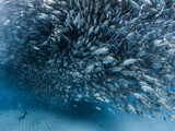 A School of Fish over a Diver, Baja California. Photographic Print by Christian Vizl