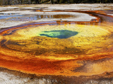 Chromatic Spring in Upper Geyser Basin, Yellowstone National Park Photographic Print by Allison Schwickerath