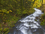 Gorton Creek During the Fall Within the Columbia River Scenic Area, Oreogn. Photographic Print by Patricia Davidson