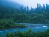 Evening in the Forest, Washington Photographic Print by Ethan Welty