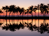Palm Trees are Silhouetted and Reflected at Sunset on the Tropical Big Island of Hawaii. Photographic Print by Allison Maree Austin
