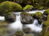 Flowing Creek Water Among Mossy Rocks Near the Base of Elk Creek Falls and the Coquille River Photographic Print by Patricia Davidson