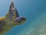 Galapagos Islands, Ecuador Fotografie-Druck von Karine Aigner