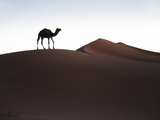 Lone Camel Photographic Print by Ethan Welty