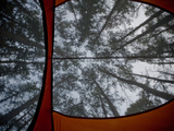 View from Inside Tent Looking Up into the Trees, White River, Arkansas Photographic Print by Andrew R. Slaton