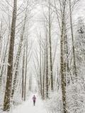 Steven Gnam - Winter Trail Running Fotografická reprodukce