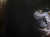 Extreme Close Up of the Face of a Cute and Soft Wooley Monkey. Photographic Print by Patrick Brooks Brandenburg