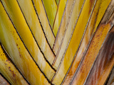 Details of a Palm Plant That Has Interlocking Colorful Elements in Miami Beach, Florida. Photographic Print by Sergio Ballivian