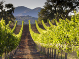 Arroye Grande, California: a Central Coast Winery Lámina fotográfica por Ian Shive