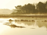 The Mist Rises over a Peaceful Dawn on the Marsh, Scarborough, Maine Photographic Print by Nance Trueworthy