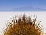 Details of Native Cactus Species on the Island of Incahuasi in T Photographic Print by Sergio Ballivian