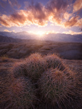 Barrel Cactus in the Alabama Hills at Sunset Photographic Print by Miles Morgan
