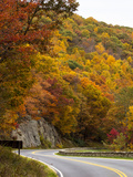 Immediate Needs- Autumn in the Shenandoah National Park, Virginia Photographic Print by Larry Patterson