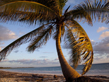 A Palm Tree on a Curving Coastline Catches the Morning's First Rays. Photographic Print by Allison Austin