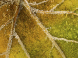Detail of Frost on Leaf in Great Smoky Mountains National Park in North Carolina Photographic Print by Melissa Southern