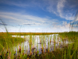 Mad Island Marsh Preserve, Texas: Landscape of the Marsh During Sunset. Photographic Print by Ian Shive