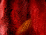 Detail of the Eggs of a Spanish Dancer. Photographic Print by Andy Lerner